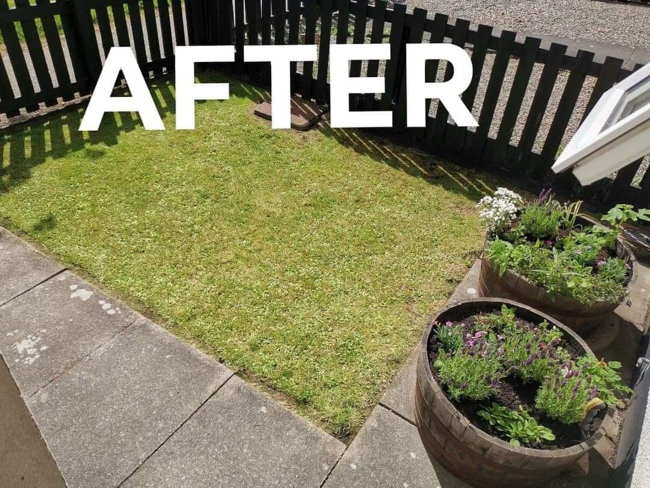 Tidy garden with freshly mowed lawn and newly potted plants and flowers